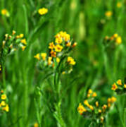 Yellow Wildflower Photograph Poster