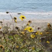 Yellow Wildflowers- Art By Linda Woods Poster