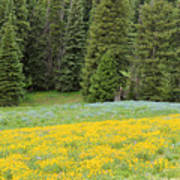 Yellowstone Meadow Poster