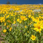 Yellowstone Wildflower Poster