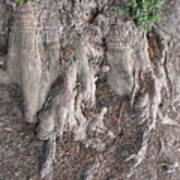 Yew Tree Roots Poster