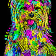 Yorkie Beauty Poster