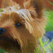 Yorkie In The Grass - Painting Poster
