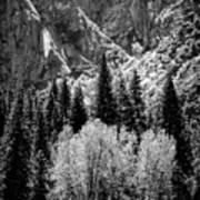 Yosemite Meadow In Black And White Poster