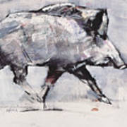 Young Boar Poster