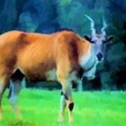 Young Eland Bull Poster