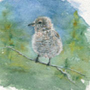 Young Northern Shrike Poster