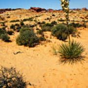 Yucca And Desert Primrose In The Valley Of Fire Poster