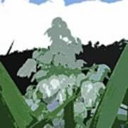 Yucca Blossom Poster