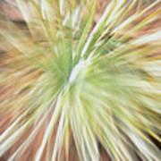 Yucca Burst Poster