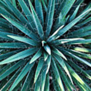 Yucca Plant Detail Poster