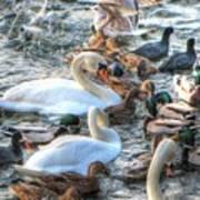 Yury Bashkin Ducks Stockholm  Poster