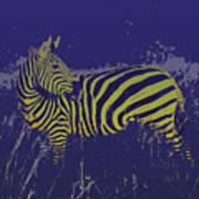 Zebra At Night Poster