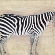 Zebra, C1620 Poster