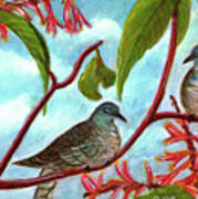 Zebra Doves Or Barred Dove Birds #309 Poster