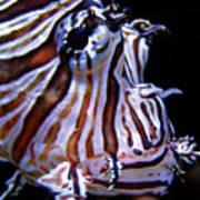 Zebra Fish Poster