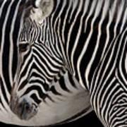 Zebra Head Poster by Carlos Caetano