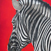 zebra in African sun Poster by Ilse Kleyn
