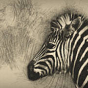 Zebra Study Poster