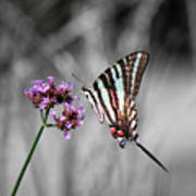 Zebra Swallowtail Butterfly And Stripes Poster