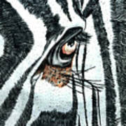Zebras Eye - Colored Pencil Art  Poster