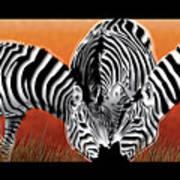 Zebras In Sunset Field Poster