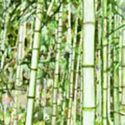 Zen Bamboo Forest Poster