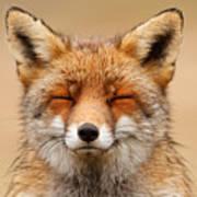 Zen Fox Red Fox Portrait Poster