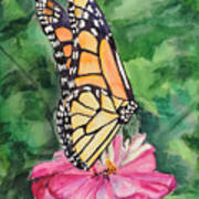 Zinnia And Monarch Poster by Judy Loper