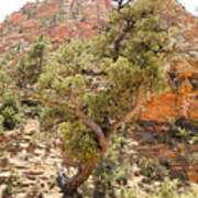Zion Hike 1 View 1 Poster
