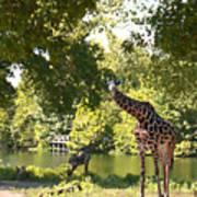 Zoo Landscape Poster
