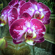 Cascade Of Orchids Poster