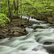 Spring View Of Little Pigeon River Poster