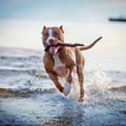 The Dog In The Water, Swim, Splash Poster