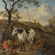 A White Horse Standing By A Sleeping Man  Poster