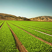 Crops Grow On Fertile Farm Land Poster