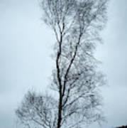 Moody Winter Landscape Image Of Skeletal Trees In Peak District  Poster