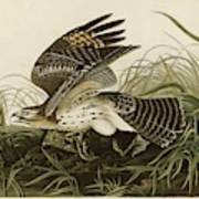 Winter Hawk  Poster