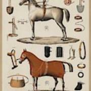 A Chromolithograph Of Horses With Antique Horseback Riding Equipments   1890  Poster