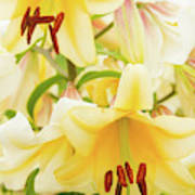 A Tower Of Lilies Poster