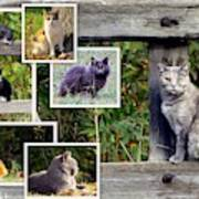 A Variety Of Cats Poster