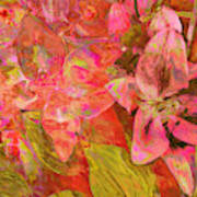 Abstract Pink Lilies Poster