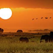 African Elephants Walking At Golden Sunrise Poster