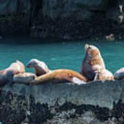 Alaska Steller Sea Lions Poster