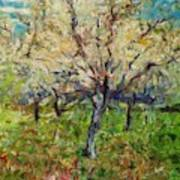 Almond Orchard Poster