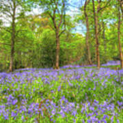 An English Bluebell Wood Poster