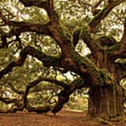 Ancient Angel Oak Near Charleston Poster