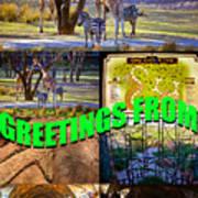 Animal Kingdom Custom Greeting Card Poster