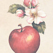 Apple And Blossoms Poster