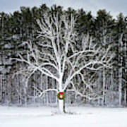 Appleton Tree In Holiday Dress Poster